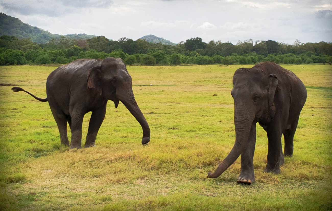 Amazing experiences not to miss in Sri Lanka