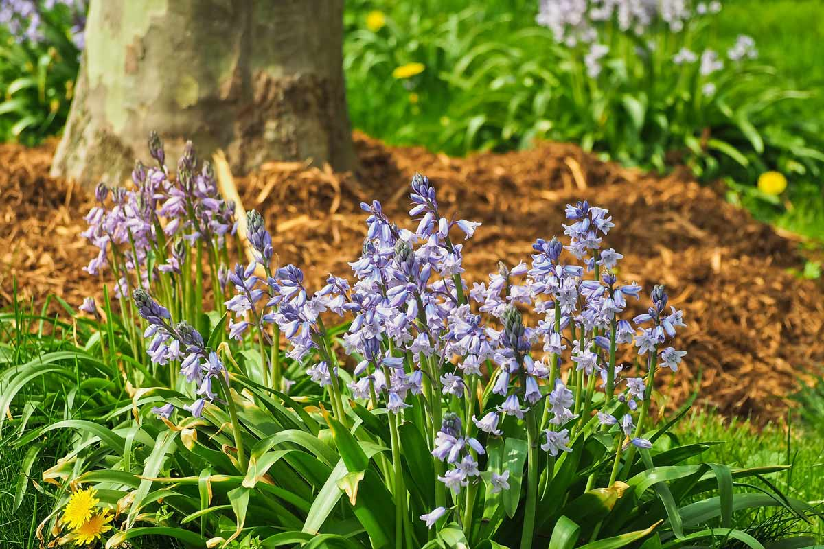 11 of the Most Beautiful Bluebell Woods in England